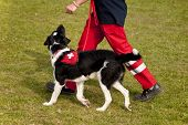 picture of hound dog  - Shelter Dog is training in a Dog School - JPG