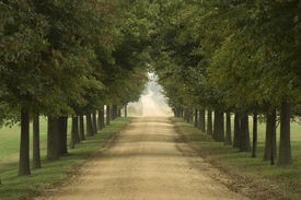foto of dirt road  - long tree lined rural dirt road - JPG