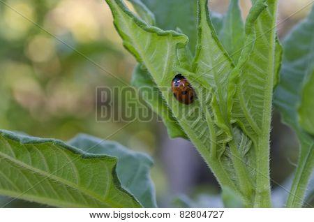 Growing Bio Vegetables In The Eastern Bulgaria