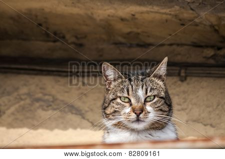 Countryside cat closeup