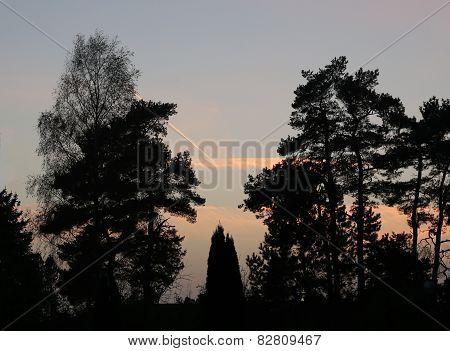 Orange Sky And Trees