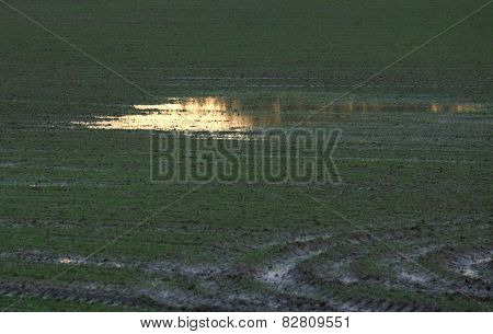 Field With Puddle