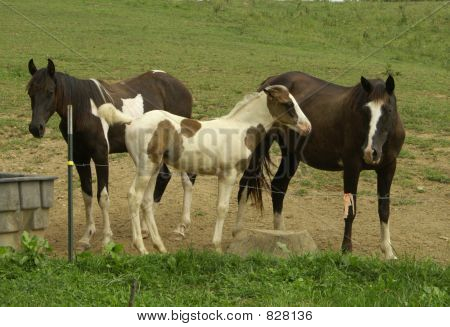 A group of Horses