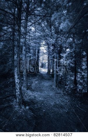 Dark Forest Path - Infrared