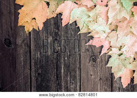 Autumn Maple Leaves On Old Wooden Board - Infrared