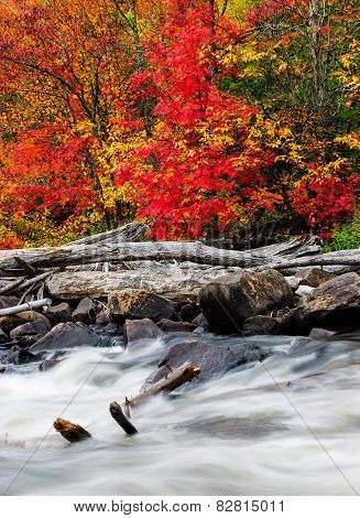 Driftwood By A Rushing Stream