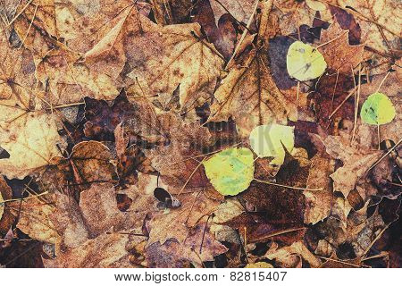 Decomposing Fall Leaves - Vintage, Faded
