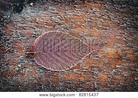 Frosted Blackberry Leaf