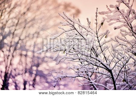 Tree Branches Covered In Snow