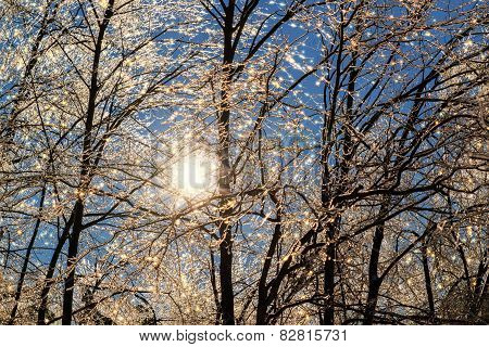 Sparkling Icy Tree Branches