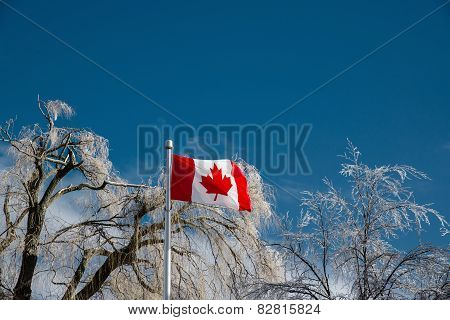 Ice Covered Trees Behind A Canadian Flag