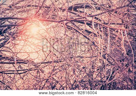 Retro Ice Covered Branches