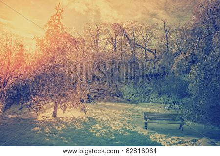 Ice Covered Trees And Park Bench