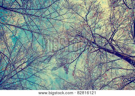 Frozen Branches Overhead - Retro