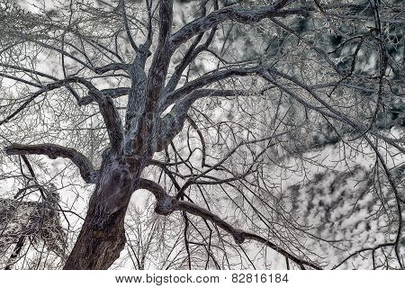 Face In An Ice Covered Tree - Color Inverted