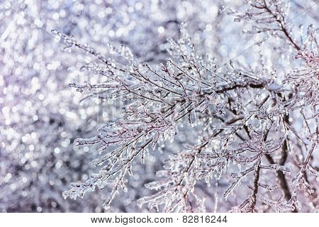 Close Up Of Sparkling Ice Covered Branches