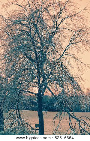 Ice Covered Tree With Broken Branches - Retro