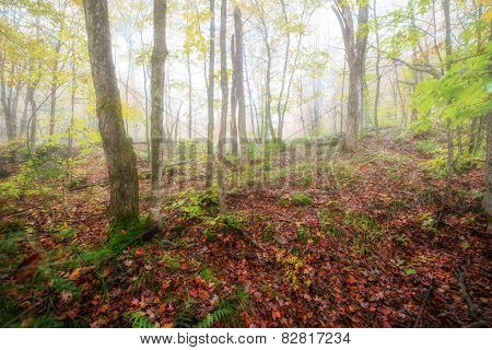 Misty Forest In An Autumn Morning