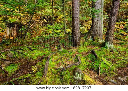 Tree Roots And Lush Green Moss