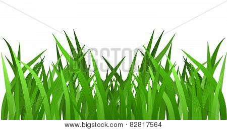 Grass isolated on white. EPS 10 vector