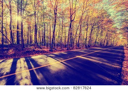 By The Colorful Treed Autumn Road - Vintage