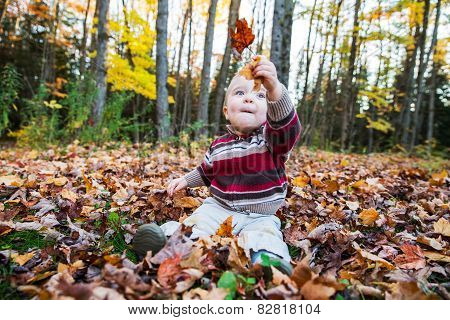 Boy Sits Holding Up Maple Leaves In His Hand