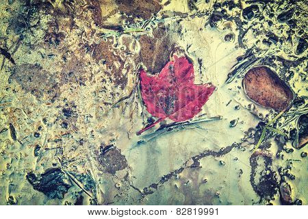 Maple Leaf On Gasoline Contaminated Beach - Retro