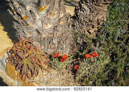 Flowers And Plants,    San Pedro Del Pinatar, Valencia Y Murcia, Spain