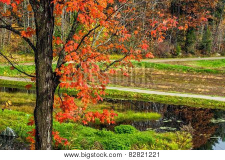 Autumn Tree And Lake By The Rural Road