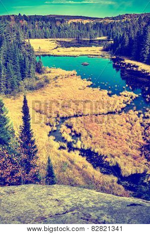 High Above A Beaver Lodge On A Pond - Vintage