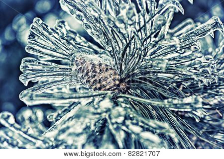 Ice Covered Pine Tree Needles And Pine Cone - Retro