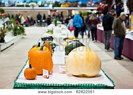 Vegetables In An Agricultural Fall Fair Competition