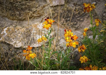 Flowers And Plants, Molinos, Teruel, Aragon, Spain