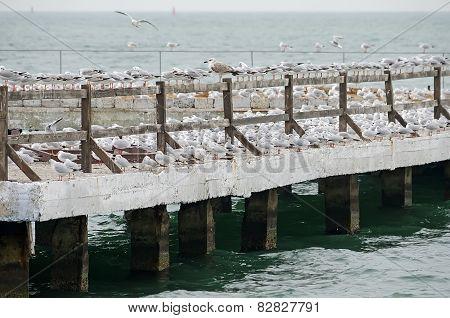 Gulls Nest On The Pier