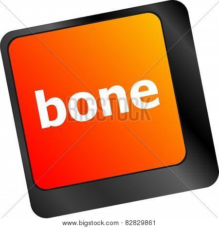 Bone Button On Computer Pc Keyboard Key