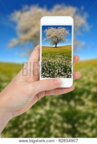 Hand taking photo of spring landscape by smartphone