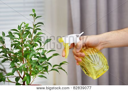 Male hand spraying flowers on white window background