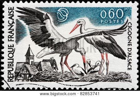 Storks Of Alsace