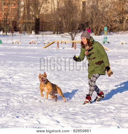 Young Woman Playing With American Pit Bull Terrier In Winter