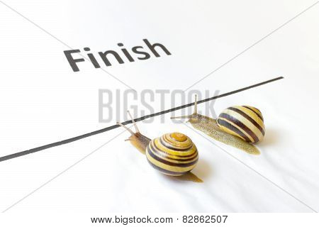 Two snails sliding to finish in contest