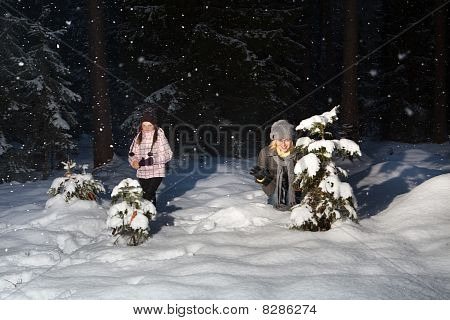 Winter Fun In Forest