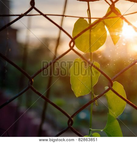 Close up of park fencing iron net
