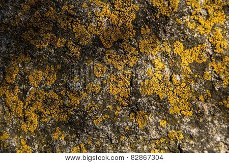 Lichens background