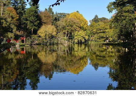 Reflection of trees in lake
