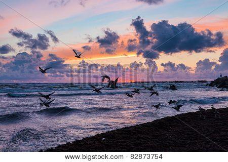 Wild Ducks At Sunset