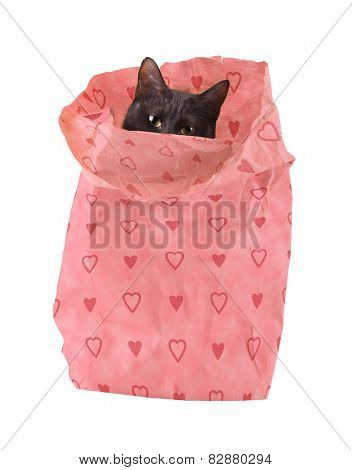 Bagful of love - a black cat peeking out of a paper bag decorated with pink hearts  - a new Valentine's friend