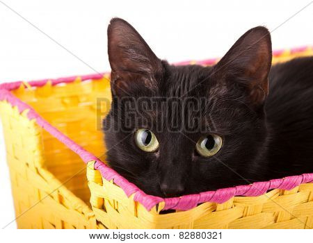 Playful black cat peeking over the edge of a yellow basket she's hiding in