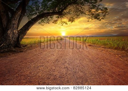 Land Scape Of Dustry Road In Rural Scene And Big Rain Tree Plant Against Beautiful Sunset Sky Use Fo