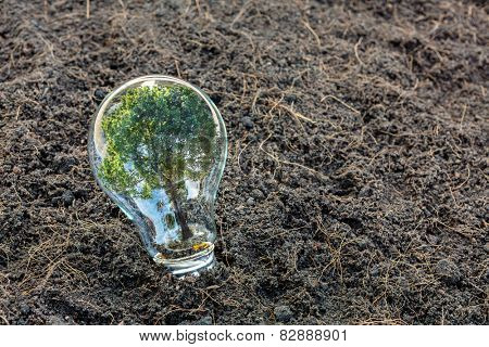 Bulb with plant growing inside