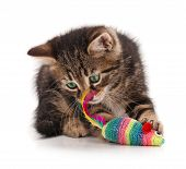 pic of mouse  - Cute kitten caught toy mouse isolated on white background - JPG